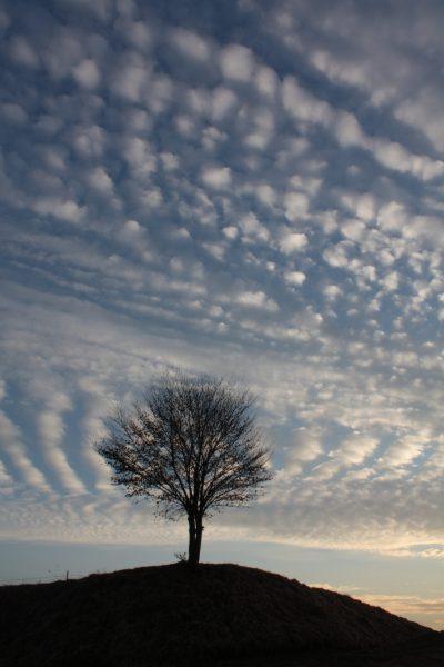tree clouded_plumed serpent